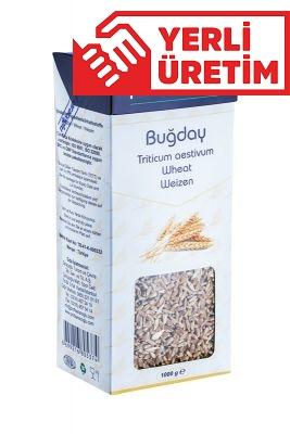 profsaracoglu - Buğday